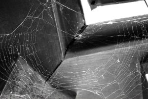 A Spider's Web by lafhaha