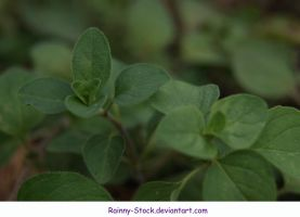 Herb1- STOCK by Rainny-Stock