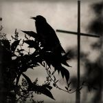 The darkness is coming by popp2