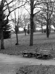 Park Benches by Amargein