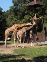 And a giraffe by HertaReny