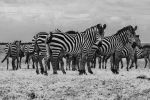 Stripe Club - Kenya by siddhartha19