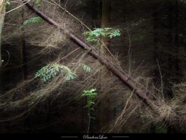 Forest 15 by AnitaJoy-Stock
