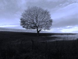 Lonely Tree by spowy123