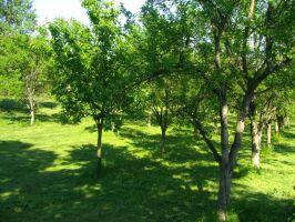 Trees in summer 1 by Norhi