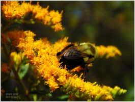 Busy Bee 3 by chained2stone