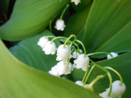 Lily of the Valley1 by Werefox89