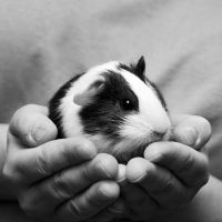 CPR Guinea Pigs XIX by LDFranklin