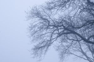 Photo: Misty Trees by Mariesen