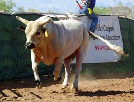 Bull Busting Stock 07 by Rejects-Stock