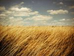 walking fields of gold by astartefix