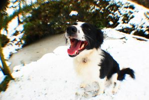 Collie In The Snow by Emmwah