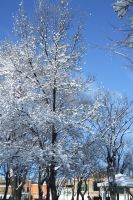 Snow-covered Trees by Vivienne-Mercier