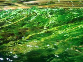 leafy water by Noora7at