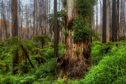 Marysville Regrowth by Bjay70