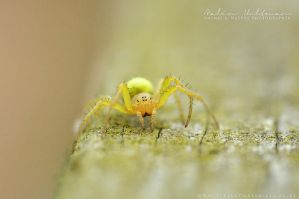 itsy-bitsy spider by Pebels