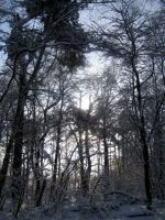 Snowy woods No.6 by redrockstock