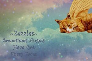 Zazzles ~ Furry Faced Angel by Shirley-Agnew-Art