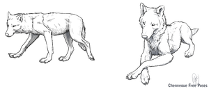 Free Wolf Poses by chenneoue