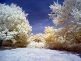 The River Exe in infrared: View 4 by yaschaeffer