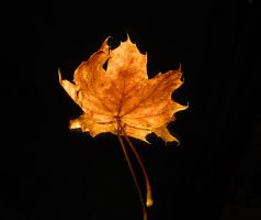 Lone Leaf by Introverses