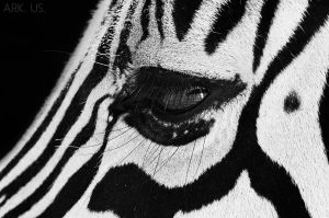 Zebra eye by Arkus83