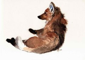 Maned Wolf in Watercolour by lauraacan