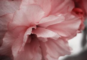 Blossom for Me by Scaphe