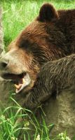 The Yawning Grizzly by Kayllik