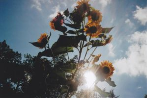 Sunflare Flowers 2 by thePARANOIDghost