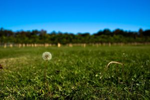 Just Dandy by bowtiephotography