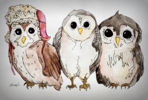 Owls. by Pedobearq