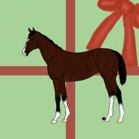 Christmas Auction- Thoroughbred by MooiHorseDesigns