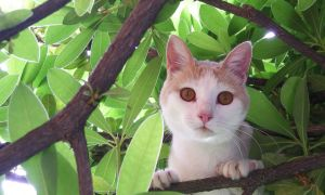 Sweety cat on tree by mikilake92
