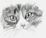 Cat Sketch by Stargazer96
