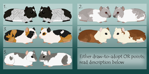 Guinea Pig Adoptables :TAKEN: by Kultapossu