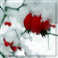 Two... under the snow... together... by Yancis