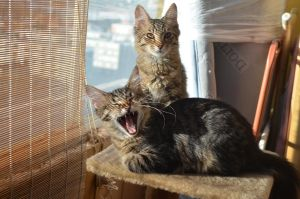 Oscar and Nero, adopted kittens by Naturefreak1