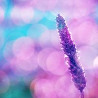 bokeh xd by all17