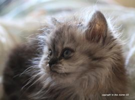 my new  kitty 11 a by GeaAusten