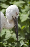 Birds of Moscow ZOO 2 by Bambr