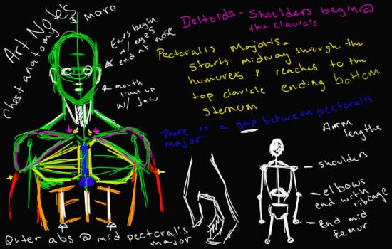 Anatomy Notes chest muscles and more by DiesAnotherDay