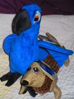 Blu welcomes new edition to my family by HomeOfBluAndshadows