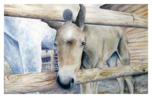 Watercolor Foal by CoolCurry