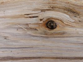Wood Texture 10 by Ox3ArtStock