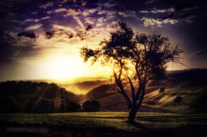 the Tree by RickPatway