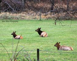 Elk County 11/2013 by GlassHouse-1