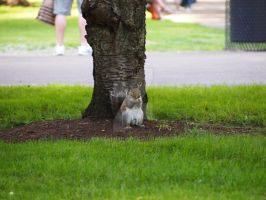 Squirrel and seek by Metalmixer