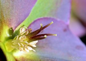 Feelers by Mark-Allison