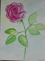 My first rose by VeroPiano